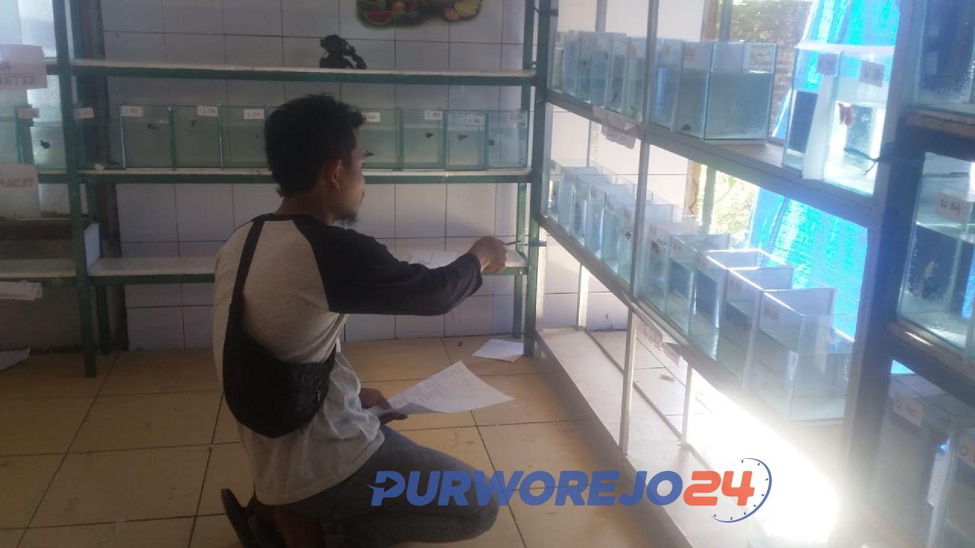 Penjurian Kontes Ikan Cupang