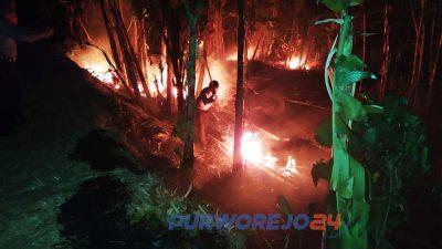 Petugas Damkar berusaha memadamkan kebakaran di kebun bambu.