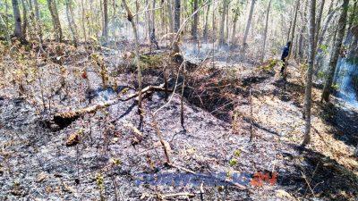 Kebakaran hanguskan 1 hektare kebun milik warga di soko bagelen. (21/10/2019)