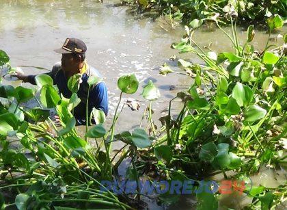 Warga Bersihkan Enceng Gondok di Irigasi Kolektor Butuh
