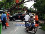 Pohon tumbang di Jalan KH. Zarkasyi, Lugosobo, Kecamtan Gebang Purworejo