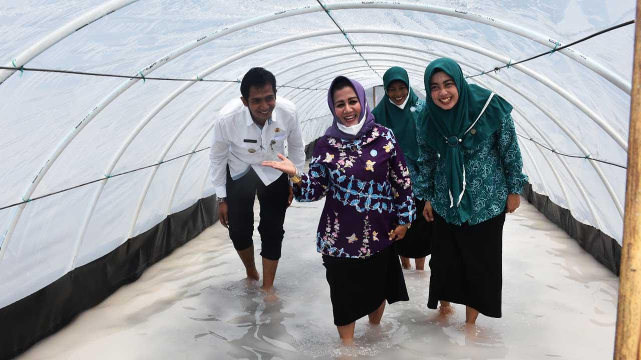 Ketua TP PKK Kabupaten Purworejo mengunjungi usaha terapi garam dipusatkan di tambak garam pantai Jetis Desa Patutrejo
